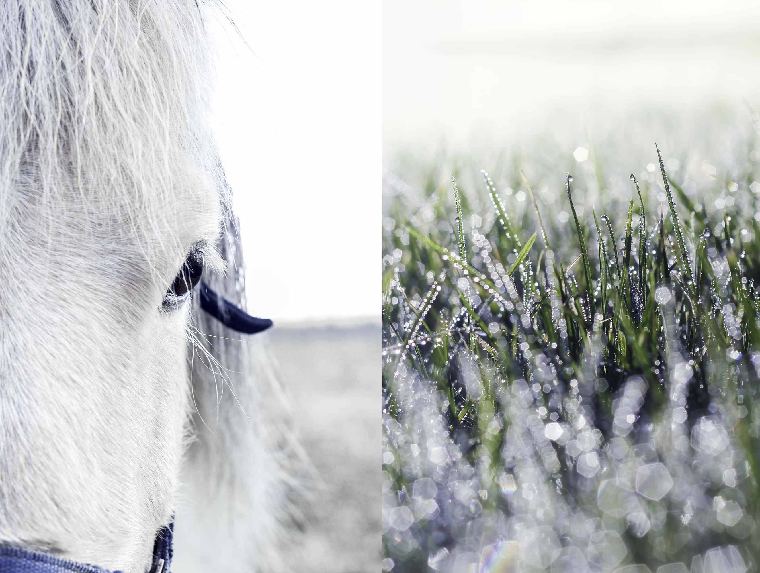 Travel / Nature White horse
